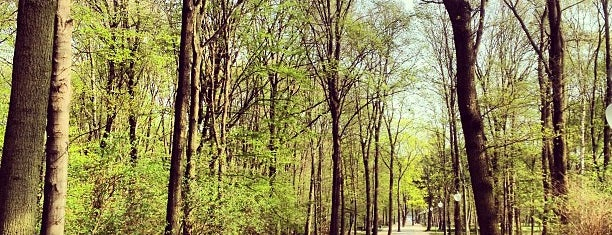 Tiergarten is one of Berlin: What to do.