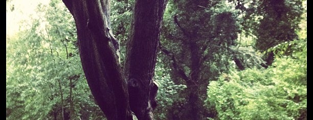 """Sydenham Hill Wood is one of Wood""""Forest""""meditazione_ Kent/East SusseX."""