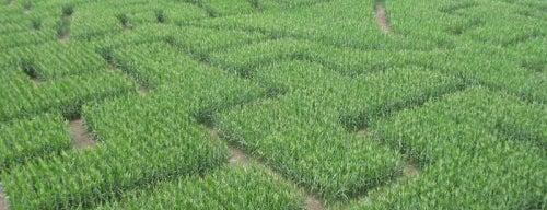 Shyrocks Farms & Corn Maze is one of Columbia's Best Kept Secrets.