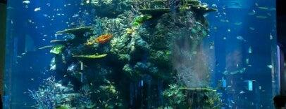 Maritime Experiential Museum & Aquarium (MEMA) is one of Singapore.
