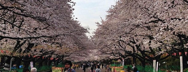 Ueno Park is one of Tokyo City Guide.