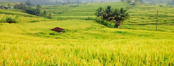 Jatiluwih Rice Field is one of Go Ahead, Be A Tourist.