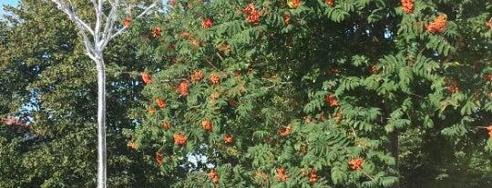 Hopeinen puu is one of Patsaat ja muistomerkit.