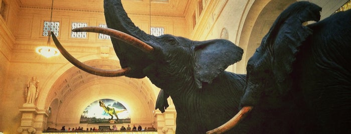 The Field Museum is one of I Want Somewhere: Sights To See & Things To Do.