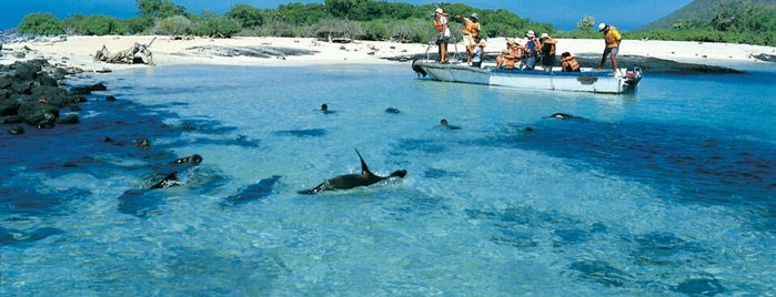 Galapagos Islands is one of Gulliver Twist.