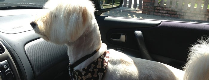 Euphuria Pet Salon is one of The 15 Best Places for a Grooming in Los Angeles.