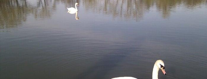 Vestecký rybník is one of Jezera.
