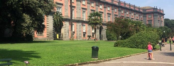 Parco di Capodimonte is one of ZeroGuide • Napoli.