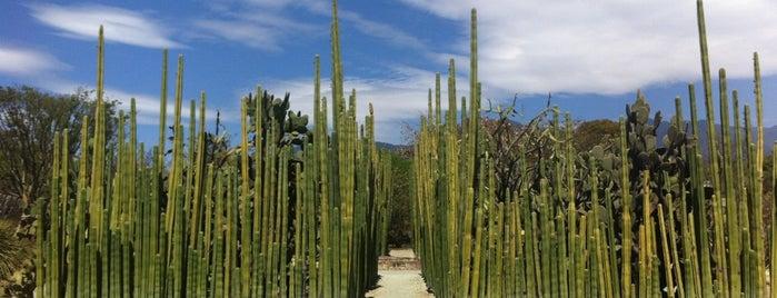 Jardin Etnobotanico De Oaxaca is one of Travel Guide to Oaxaca.
