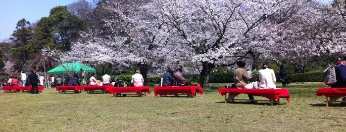 Maizuru Park is one of FUKUOKA.
