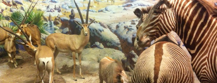 American Museum of Natural History is one of New York for the 1st time !.