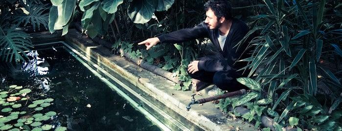 İ.Ü. Botanik Anabilim Dalı & Botanik Bahçesi is one of Photo Locations Worth Going Back.