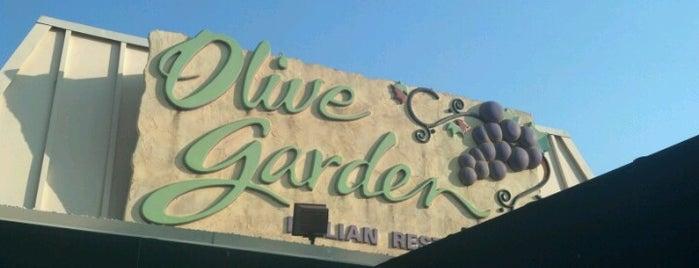 Olive Garden is one of Favorite restaurants.
