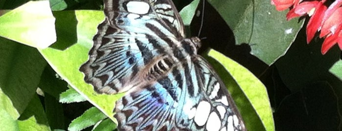 Butterfly Rainforest is one of University of Florida Explorer badge.