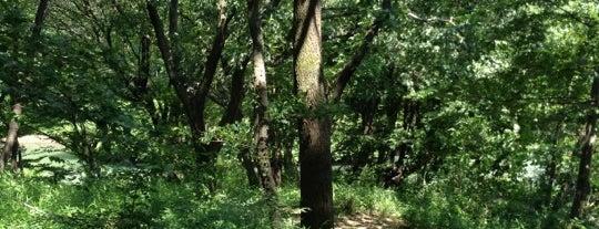 長池公園 is one of さっしーのお気に入り.
