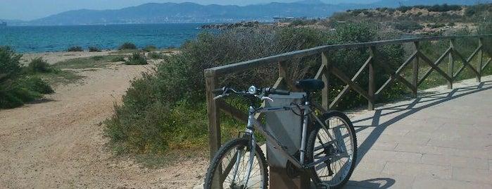 Es Carnatge is one of Mallorca Birdwatching/Ornithology.
