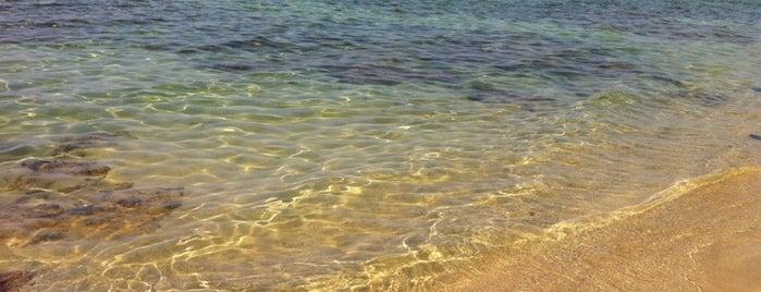 Nino' Beach is one of Frequentati abitualmente.