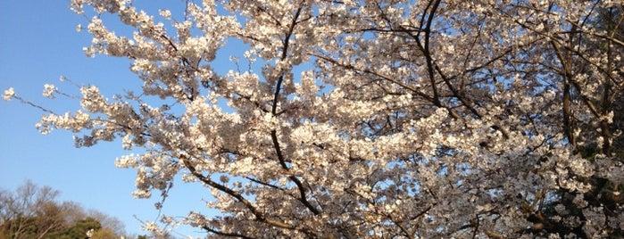 Sugekari Park is one of Nakameguro.
