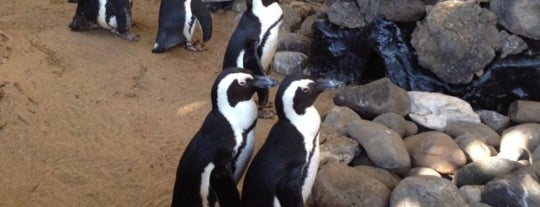 Penguins at The Hyatt is one of ALL TIME FAVORITES.