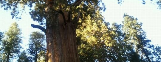 Sequoia National Park is one of Visit the National Parks.