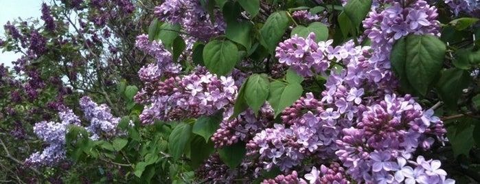 Lilac Festival is one of Roc.