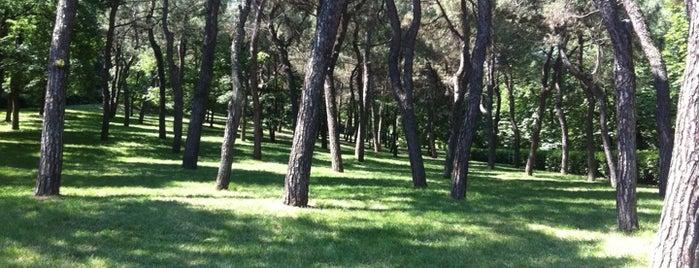 Parco Villa delle Rose is one of Il verde a Bologna.