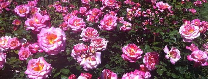 San Jose Municipal Rose Garden is one of CA Bay Area.