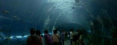 Chiangmai Zoo Aquarium is one of Guide to the best spots Chiang Mai|เที่ยวเชียงใหม่.