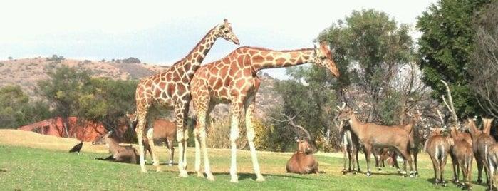 Africam Safari is one of Puebla #4sqCities.