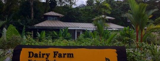 Dairy Farm Nature Park is one of Trek Across Singapore.
