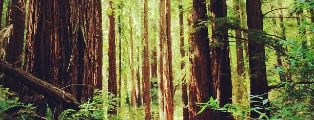 Redwood Regional Park is one of Outdoorsy TODO.