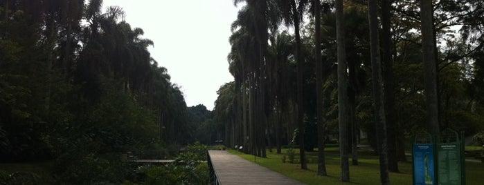 Jardim Botânico de São Paulo is one of Best places in São Paulo, Brasil.