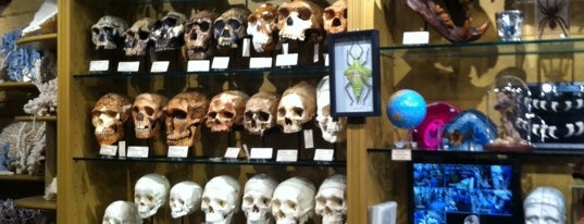 The Evolution Store is one of Special Little Places.