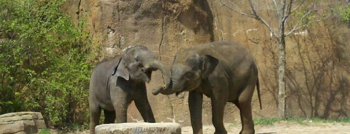 Saint Louis Zoo is one of Best Places to Check out in United States Pt 3.