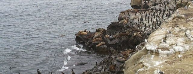 La Jolla Cove is one of Beach Bouncing in So Cal.