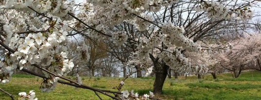 Druid Hill Park is one of City Paper's :Baltimore Living: Readers Poll '11.