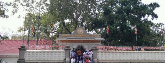 Sri Maha Bodhi is one of Trips / Sri Lanka.