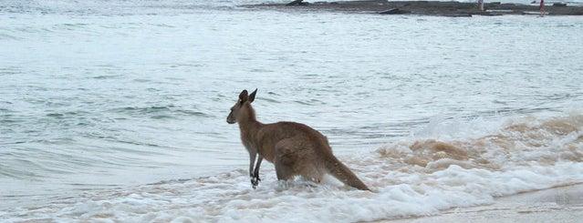 Pebbly Beach is one of Top 20 Australian Beaches.