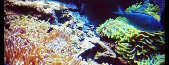 Sealife Sydney Aquarium is one of Top picks for Zoos or Aquariums.