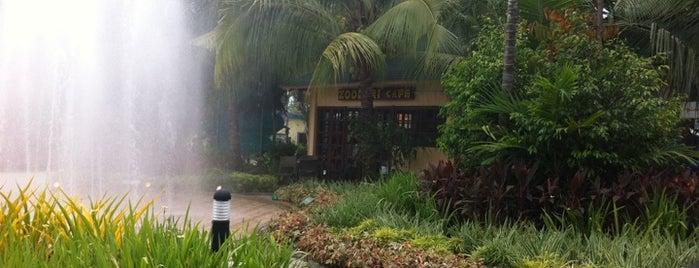 Rainforest Park Cebu is one of The Best of Cebu City 2012.