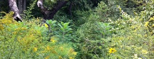 Brooklyn Botanic Garden is one of 2012 NYC.