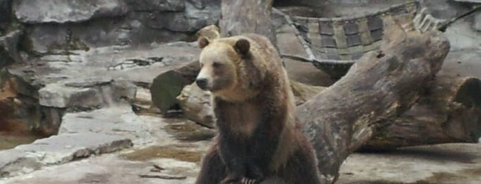Buffalo Zoo is one of Must see places in Buffalo for tourists #visitUS.
