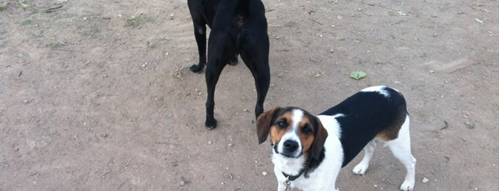 White Rock Lake Dog Park is one of DFW Parks.