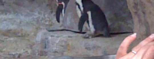 Saint Louis Zoo is one of Best Places in #STL #visitUS.