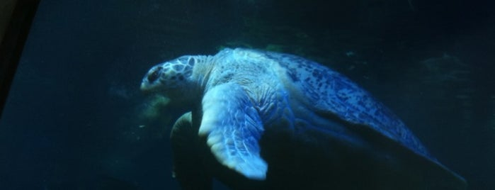 New England Aquarium is one of Best Places to Check out in United States Pt 2.