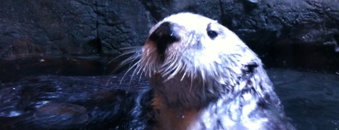 Aquarium of The Pacific is one of Best Places to Check out in United States Pt 2.