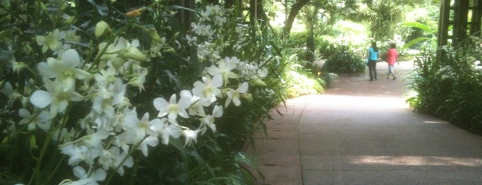 National Orchid Garden is one of Singapore's Popular Places.
