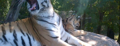 Rosamond Gifford Zoo is one of Syracuse.