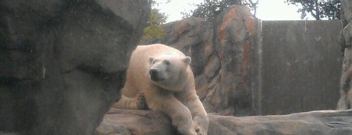 Great Bear Wilderness is one of Hipsqueak Awards Nominees.