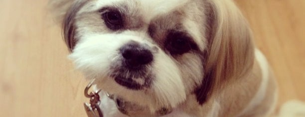 Hollywood Pets is one of The 15 Best Places for a Grooming in Los Angeles.